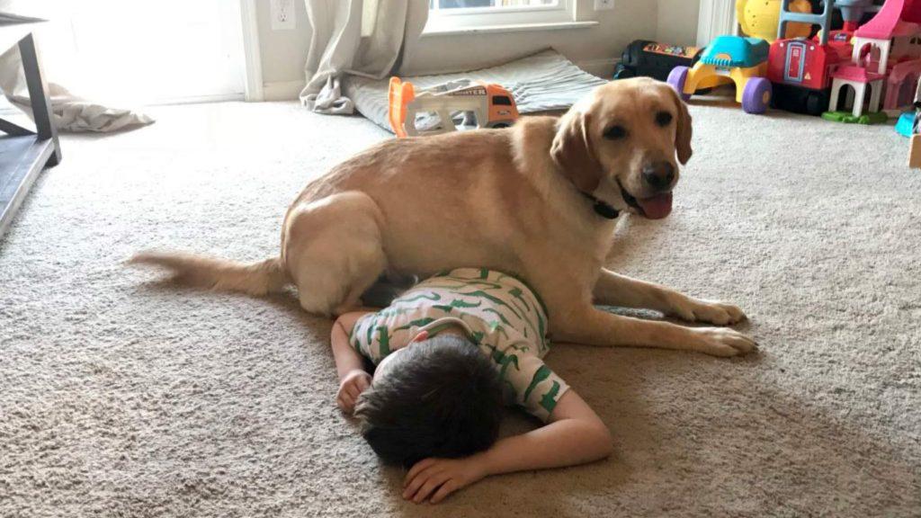 فشار درمانی با سگ