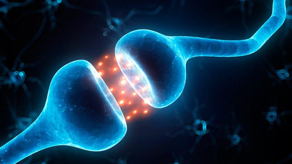 تجدید مسیرهای عصبی